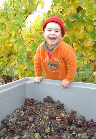 Thomas with our botrytised Riesling grapes