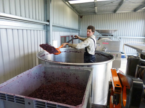 Nelson Pinot Noir ready to be pressed in our Family Winery