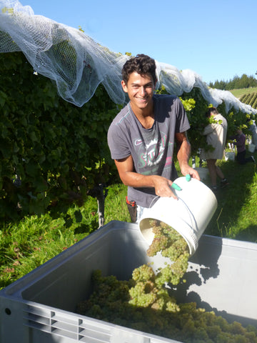 Martin Mueller, viticultural trainee at Nelson's Blackenbrook Vineyard, New Zealand
