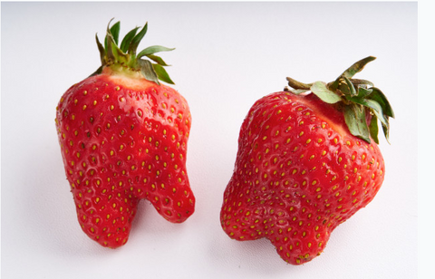 Two imperfect strawberries