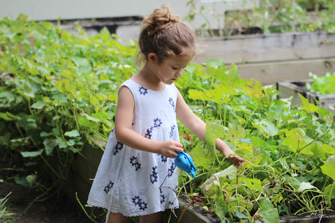 A little girl is watering vegetables in a garden.