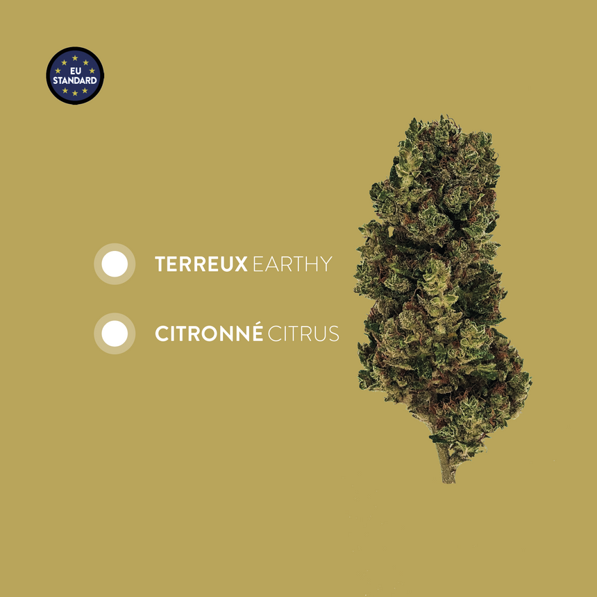 Lemoncello I OG: Lemon Haze - CBD <4.5% I THC <0.2%