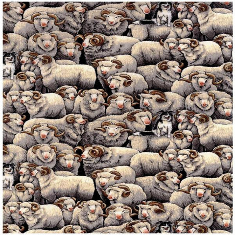 Grey Merino Sheep