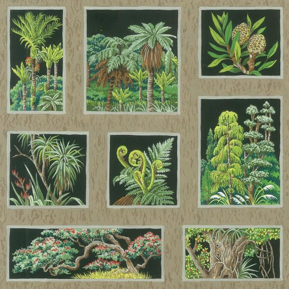 Botany - New Zealand Plant Samples