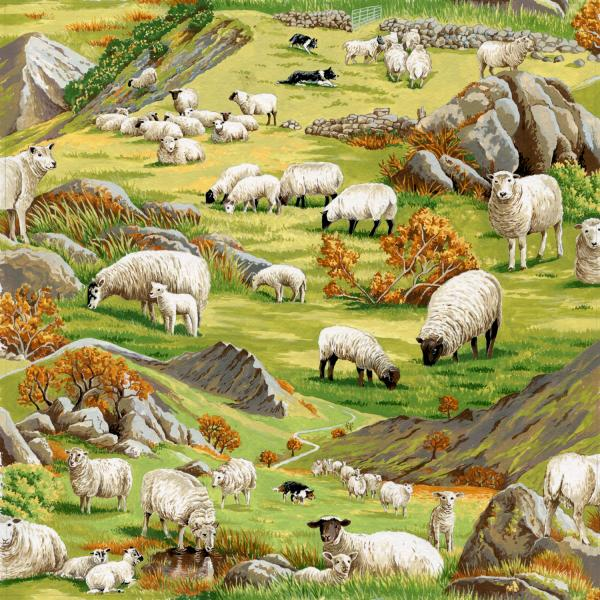 In the Country - Sheep