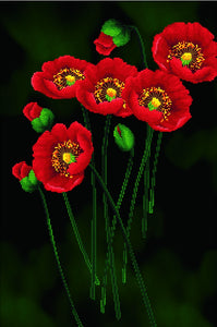 Needleart World Pre-Printed Cross-stitch kit - Red Poppies on Black
