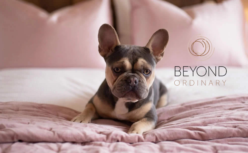 About Beyond Ordinary - Welcome To The World of Pure Silk
