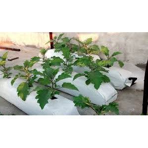 UV - Stabilized LDPE Hydroponic Grow Bag 100 x 20 x 10 Cm 400 Gsm- With Coco Peat Slab - SK Organic Farms