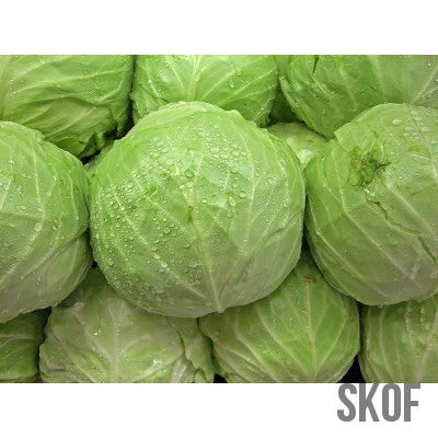 Cabbage Golden Acre-Seeds-Biocarve-SK Organic Farms