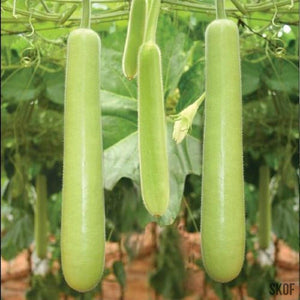 Bottle Gourd Long - SK Organic Farms