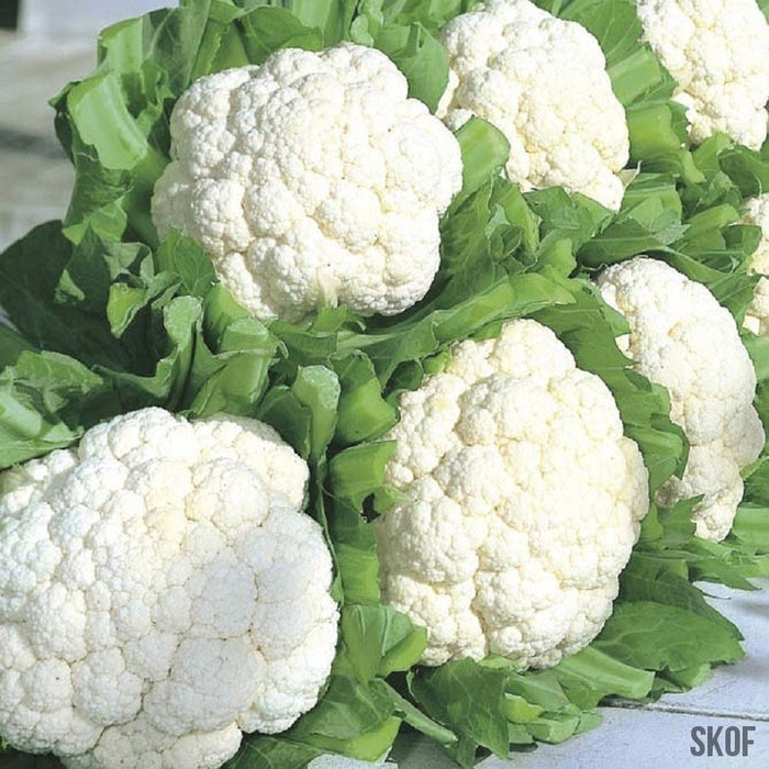 Cauliflower - BioCarve