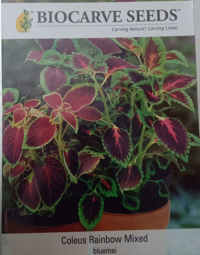 Coleus Rainbow Mixed (bluemei) 2gm