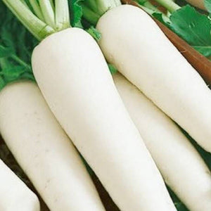 Radish Long White - SK Organic Farms