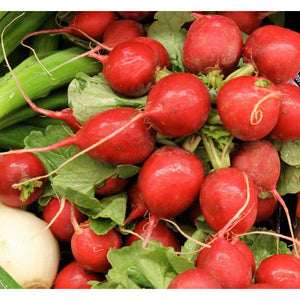 Radish Red Globe - SK Organic Farms