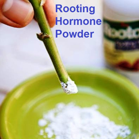 Rooting hormone powder