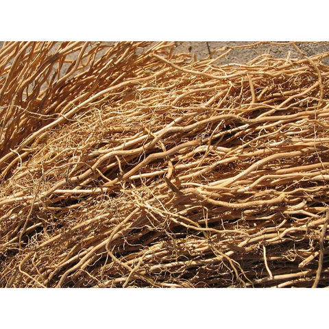 Vetiver - ( no shipping , store pick up or Home Delivery option only )-Herbal Plant-SK Nursery-SK Organic Farms