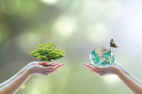 1 hand holding a tree and 1 hand holding the world to represent an eco-friendly planet