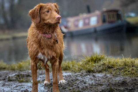 wet dog in front of canal