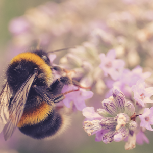 How To Create A Bee-Friendly Garden At Home