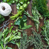 A Guide to Growing Herbs at Home (and Keeping them Alive!)