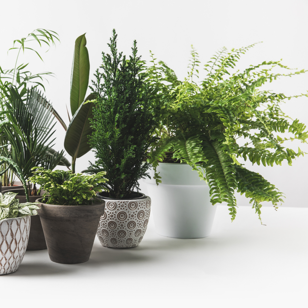 3 Powerful Health Benefits Of Houseplants Plant Store,Budget Friendly Home Bar Ideas On A Budget
