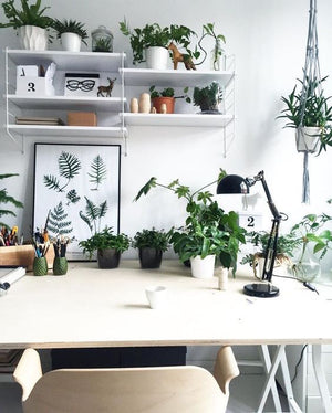 Why Office Plants Will Get You That Promotion