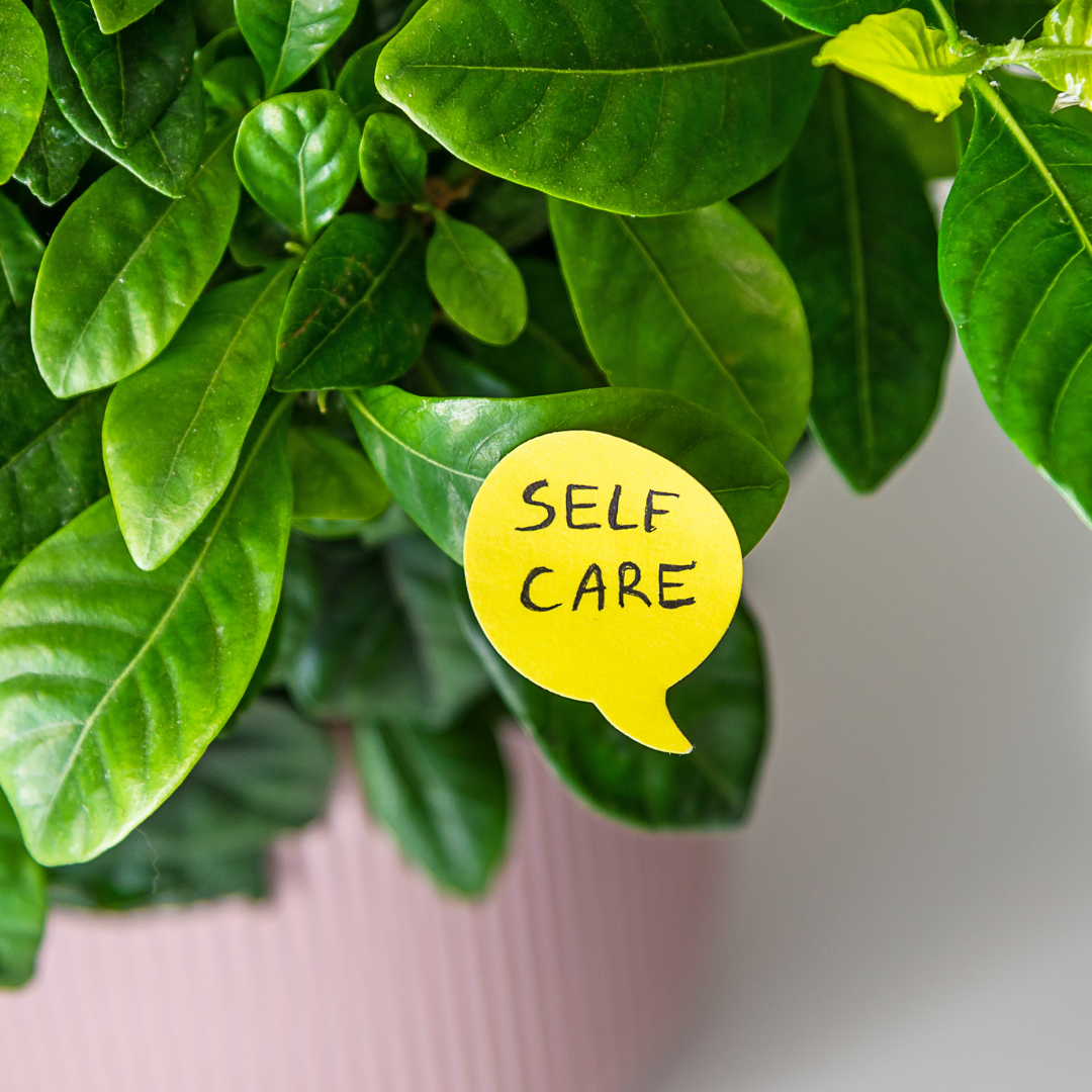 7 Lessons Plants Have Taught us About Self-Care