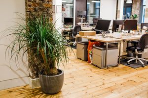 The Life Changing Magic of Plants on Workplace Well-Being