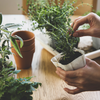 Herbs at Home: 5 Common Herbs & Our Tips for Growing Them Indoors