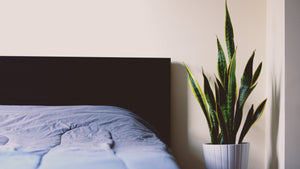 Plants to get you out of Bed in the Morning