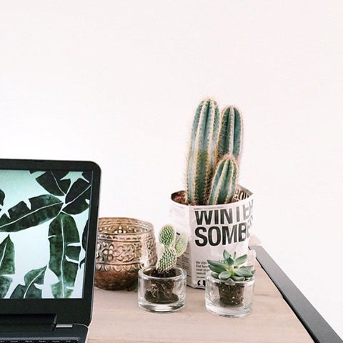 Cactus on desk