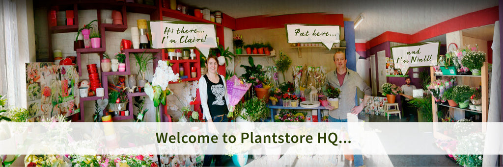 about the plantstore