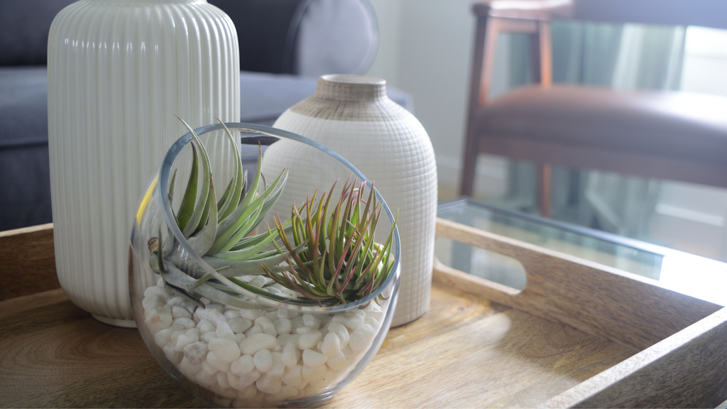 An image of a glass terrarium with airplants on a wooden table