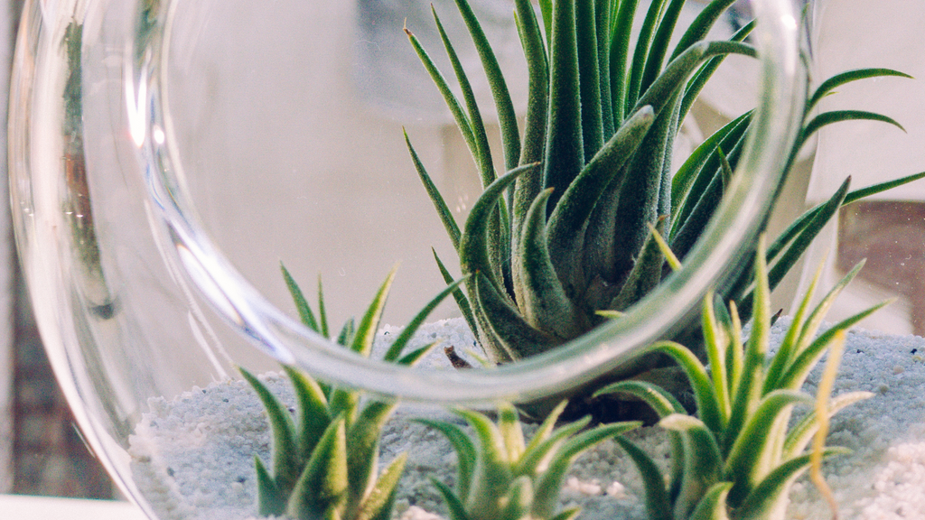 An image of a large glass terrarium with stones and small airplants