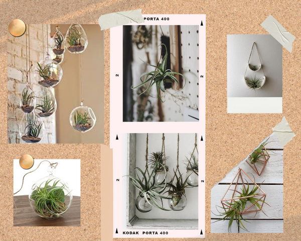 A mood board image of different airplant styling ideas