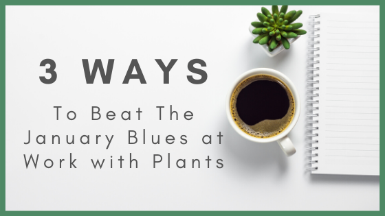 3 Ways To Beat January Blues At Work With Plants