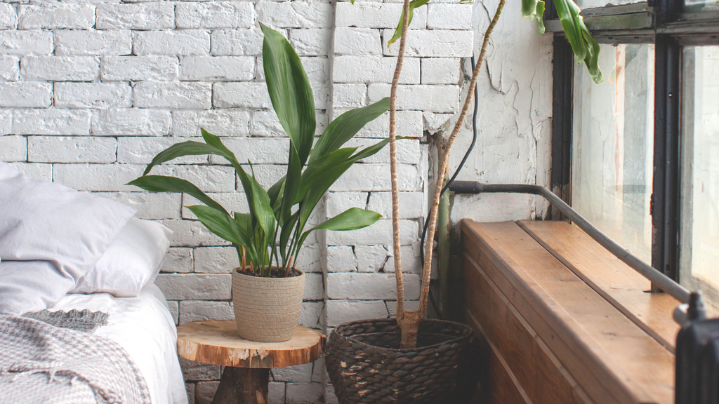 Large Peace Lily on wooden bedside table