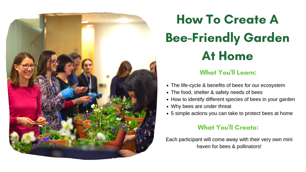 how to create a bee friendly garden at home workshop