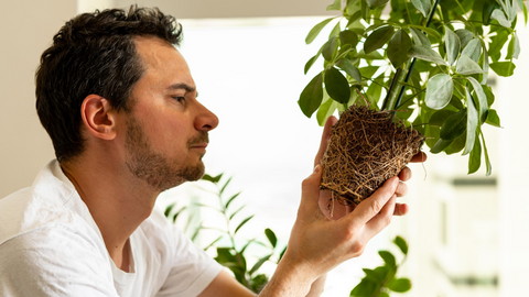 An image of a man inspecting his houseplant