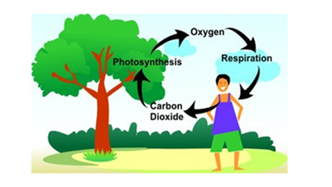 Co2 - Oxygen Relationship