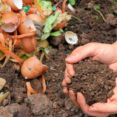 How to compost at home using kitchen scraps
