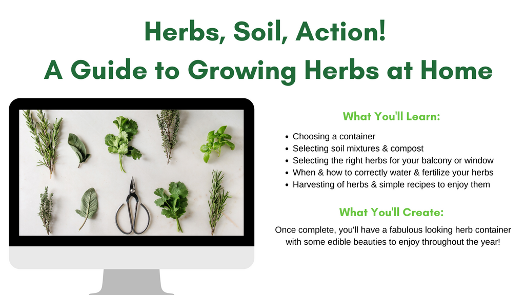 How to grow your own herbs at home Workshop
