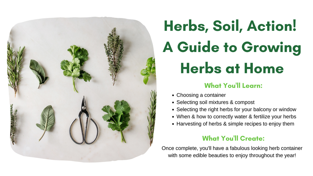 How to create your own herb garden at home workshop