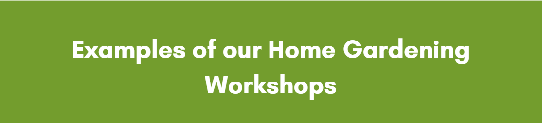 PlantStore Ireland Home Gardening Workshops