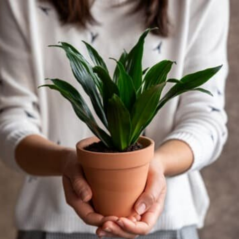 Tips on how to take care of houseplants