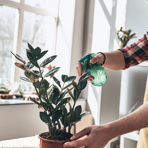 How much should I be watering my houseplants?