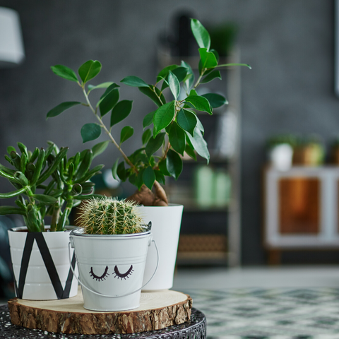 Tips for caring for your houseplant