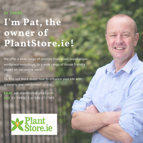 Plant Installation, Workshops and online shop Ireland