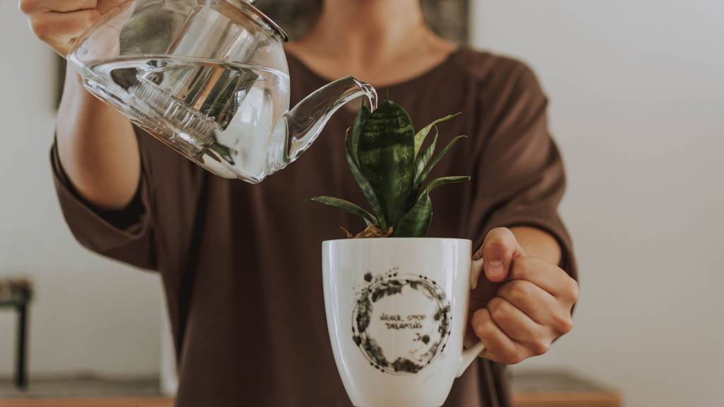 An image of a woman watering a small potted plant
