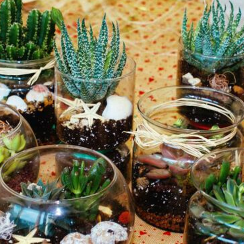 Mini glass terrariums filled with small succulents